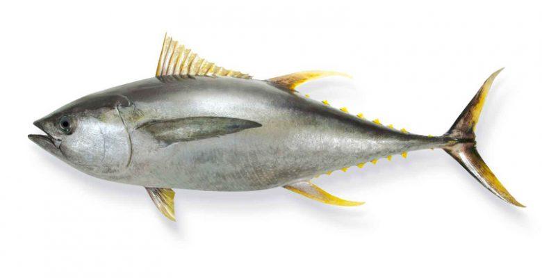 Ton Balığının Faydaları