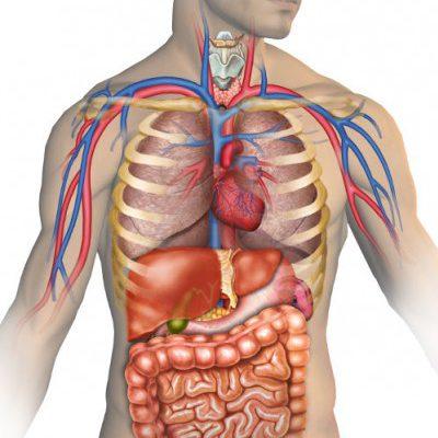 Sağlık Ve Vücudumuz