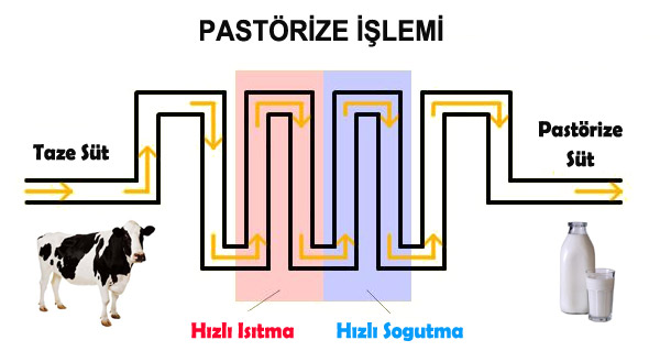 Pastörizasyon